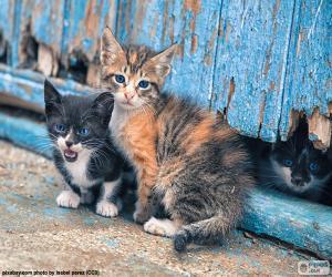 Puzzle de Tres gatitos