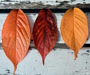 Puzzle de Tres hojas de otoño