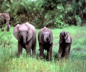 Puzzle de tres pequeños elefantes