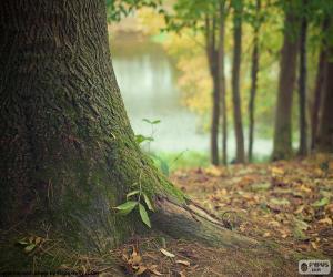 Puzzle de Tronco de árbol