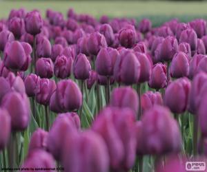 Puzzle de Tulipanes púrpura