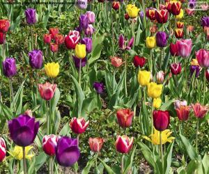 Puzzle de Tulipanes