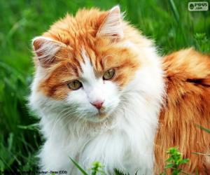 Puzzle de Un gato elegante