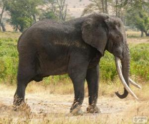 Puzzle de Un gran elefante