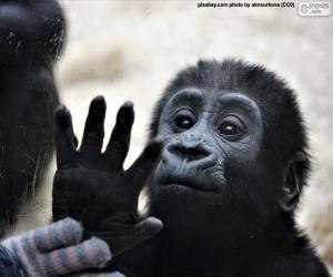 Puzzle de Un mono curioso