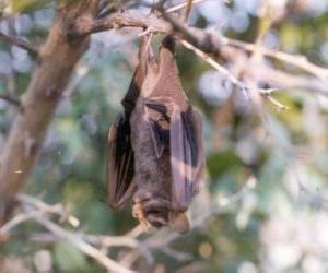 Puzzle de Un murciélago colgado de la rama durmiendo