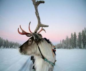Puzzle de Un reno navideño tirando de un trineo