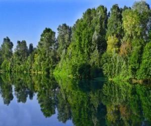 Puzzle de Un río con el reflejo de los árboles en sus aguas