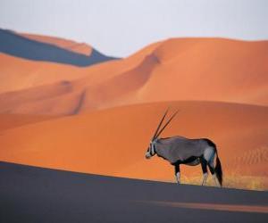 Puzzle de Una gacela de Grant con sus largos cuernos en las dunas del desierto