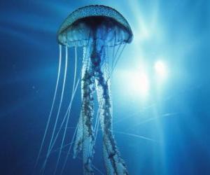 Puzzle de Una medusa, aguamala o aguaviva con sus tentáculos