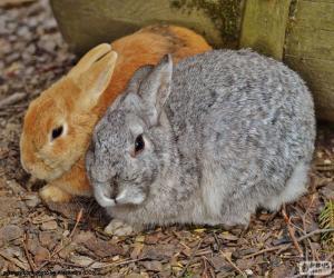 Puzzle de Una pareja de conejos