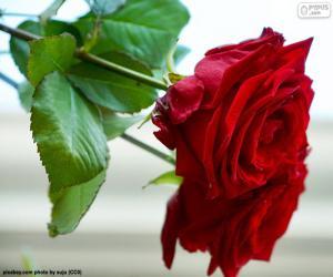 Puzzle de Una preciosa rosa como un regalo para mamá