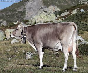 Puzzle de Vaca en alta montaña