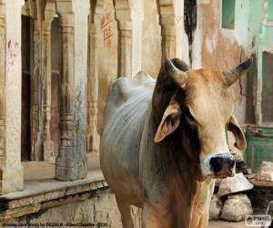 Puzzle de Vaca sagrada, India