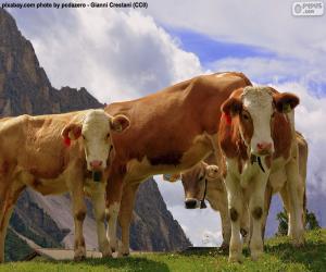 Puzzle de Vacas