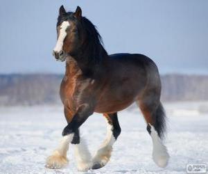 Puzzle de Vladimir caballo originario de Rusia