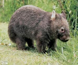 Puzzle de Wombat