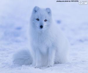 Puzzle de Zorro polar en invierno
