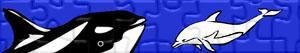 Puzzles de Delfines y otros mamíferos marinos