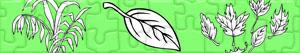 Puzzles de Plantas y Hojas