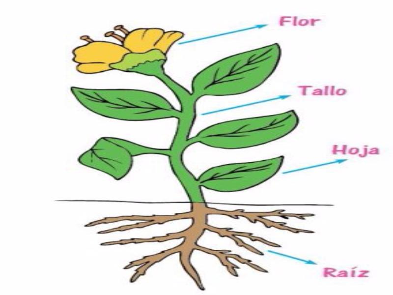 puzzle de las plantas y sus partes rompecabezas de