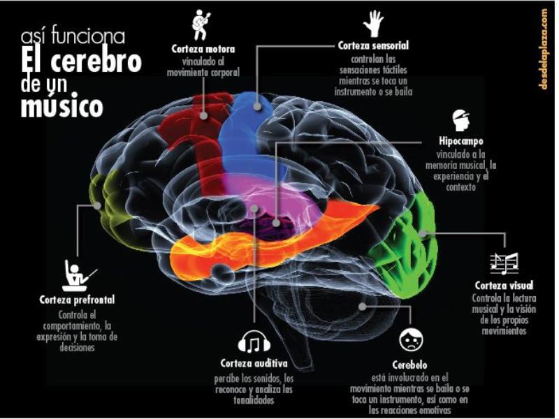 Puzzle de Partes del cerebro , rompecabezas de