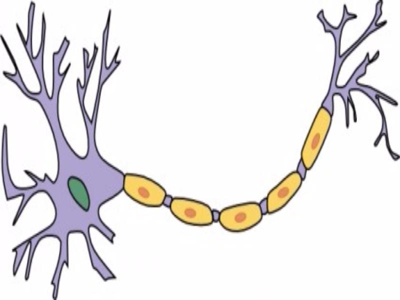 Puzzle de Puzzle neurona , rompecabezas de
